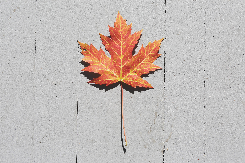 fall-jesen-pocetna