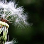 Sprečite alergije na jednostavan način