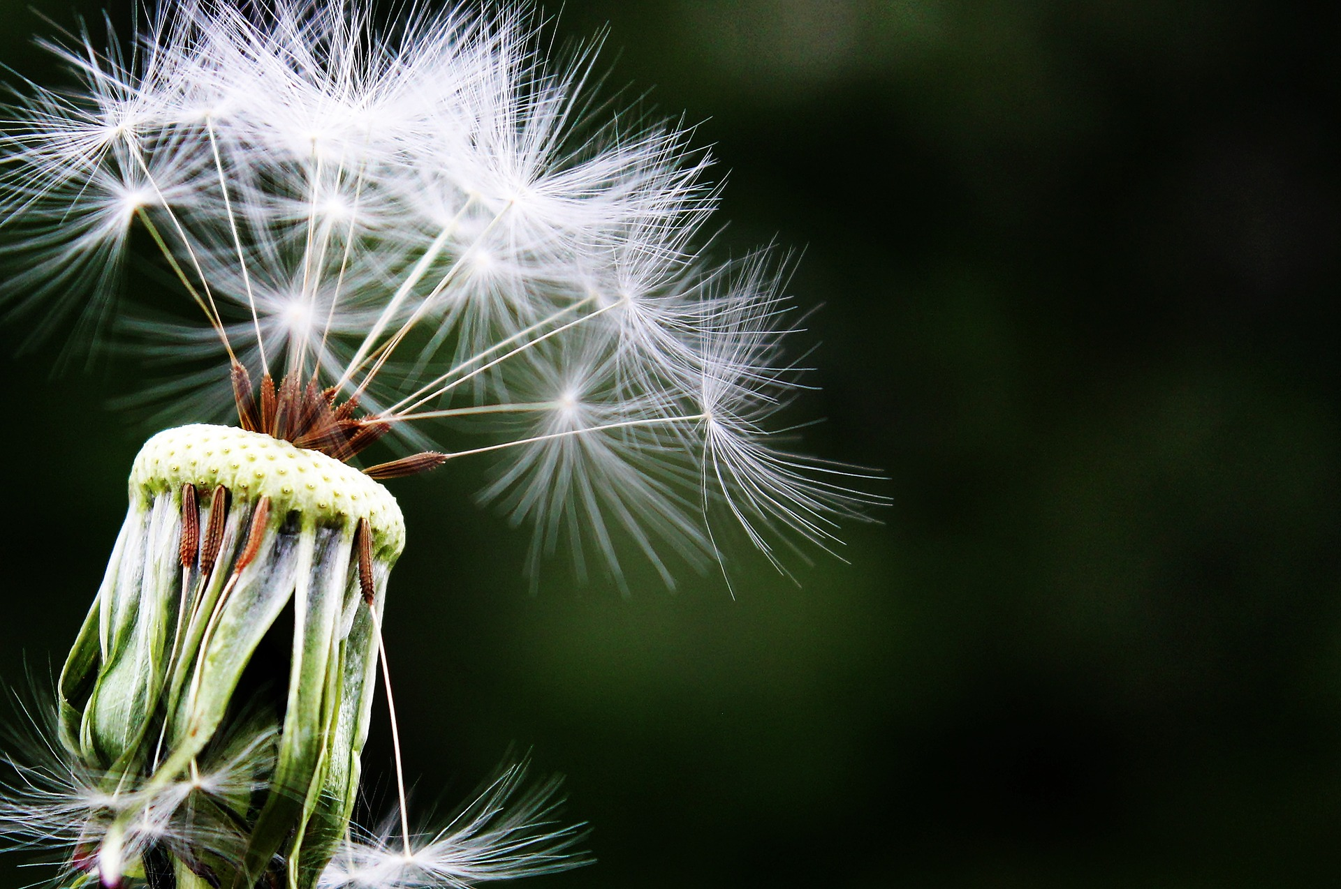 foto-polen-pocetna